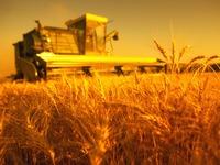 Россия будет поставлять зерно в Японию