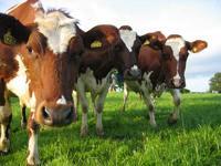 Российское животноводство растёт