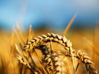 Аграрии России получат более 100 млрд. руб. в качестве субсидий