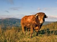 Россия приостановила ввоз мяса из Ирландии