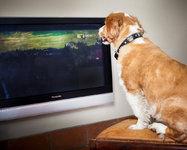 Канал для собак DOGTV начинает вещание в Европе